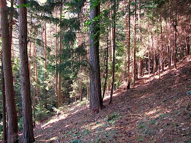 Waldquerung