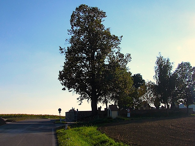 Friedhof Els