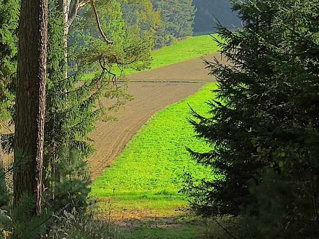 Frische Grün