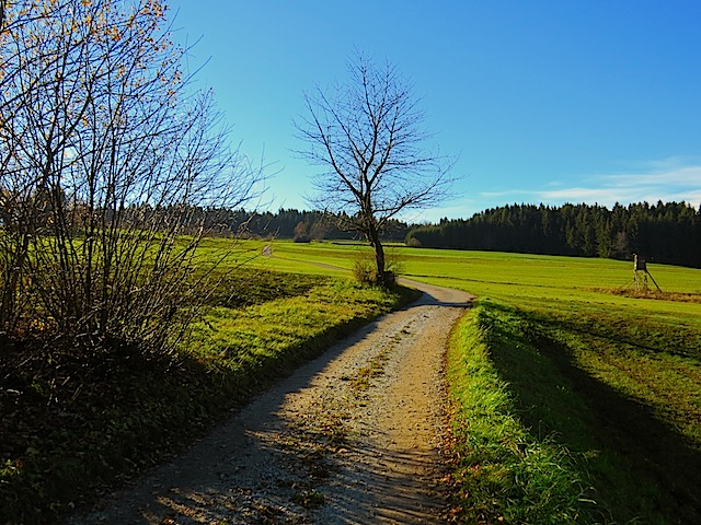 Nach dem Bannwald