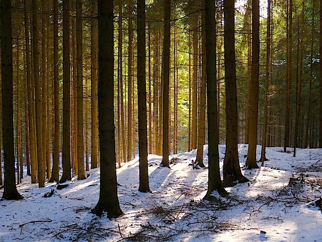 Sonne und Wald