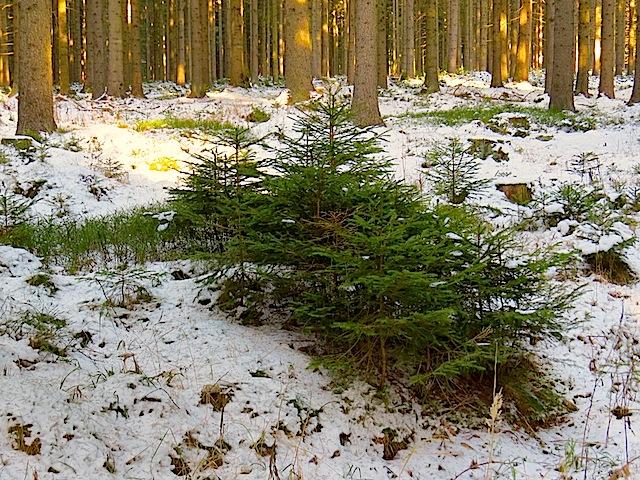 Waldjugend