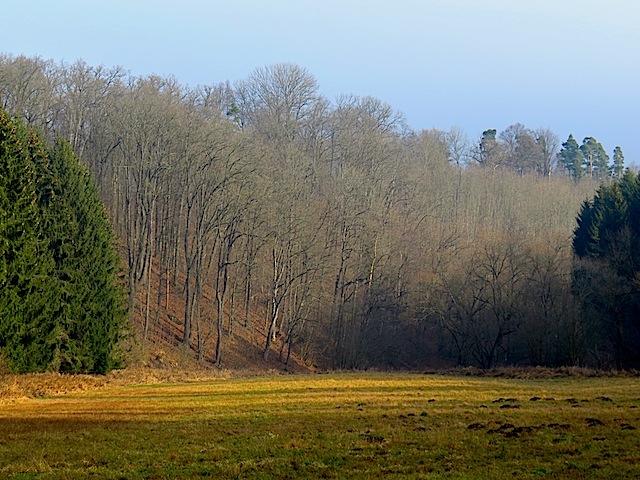 Winterlaubwald