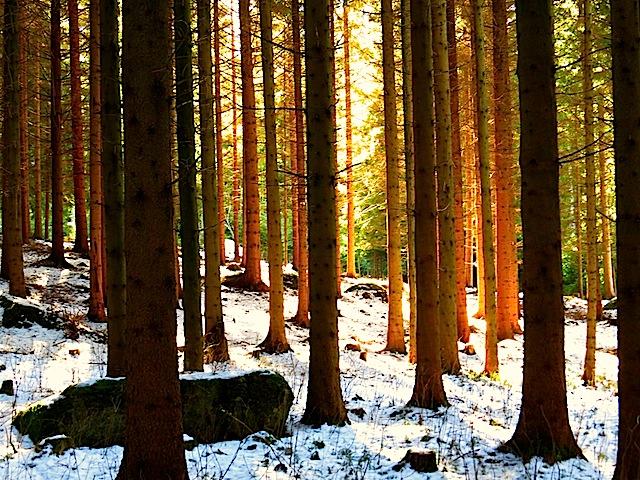 Wald bei Bad Traunstein