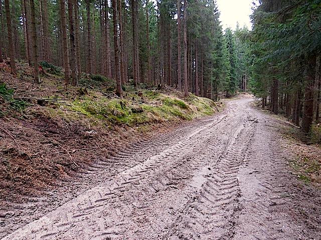 Aufgeweichter Forstweg