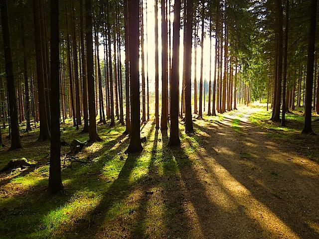 Die Sonne im Wald
