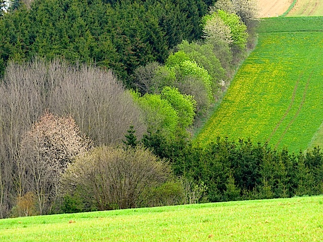 Frühlingsgrün