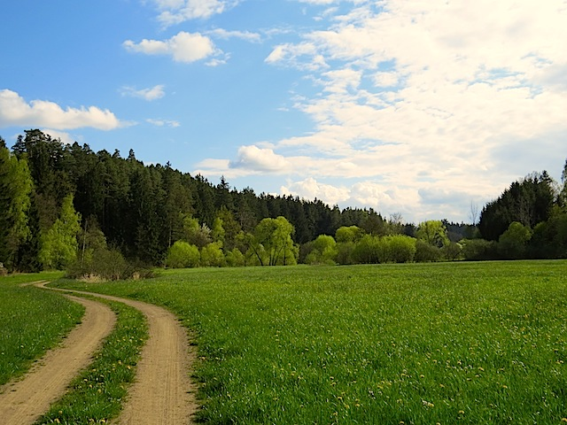 Feldweg in der Schönen Au