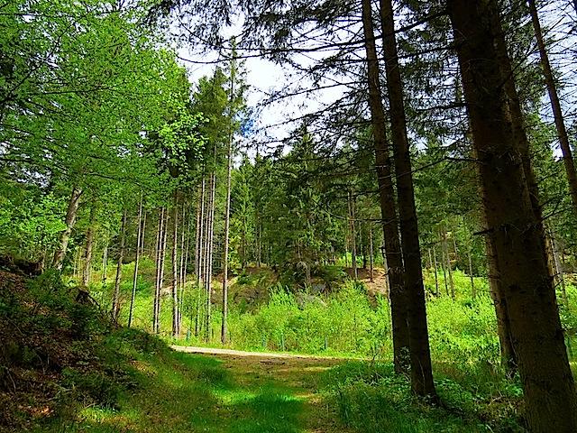 Beim Forstweg rechts