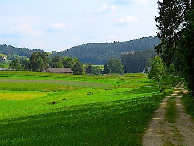 Waldrand bei Pehendorf