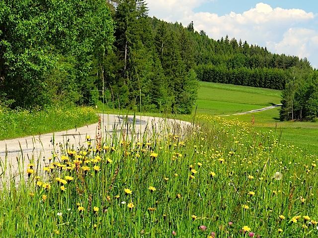 Güterweg nach Haselbach