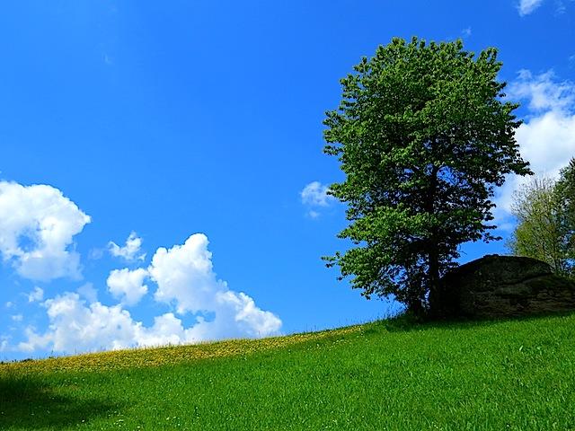 Baum und Restling