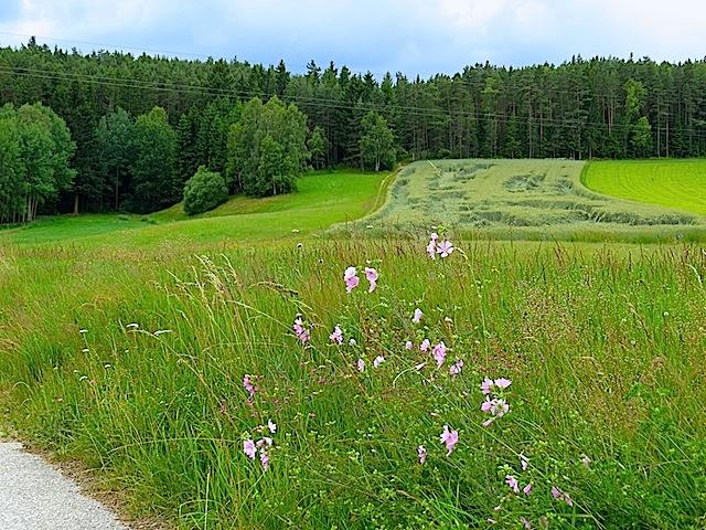 Bei Klein-Gundholz