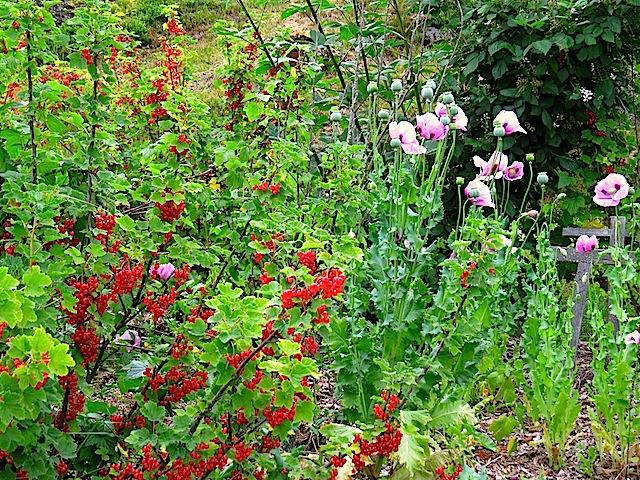 Garten in Kinzenschlag