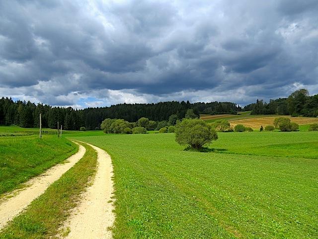 Feldweg ins Zwettltal