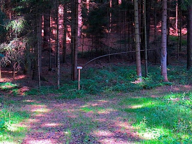 Im Wald beim Fuchsloch