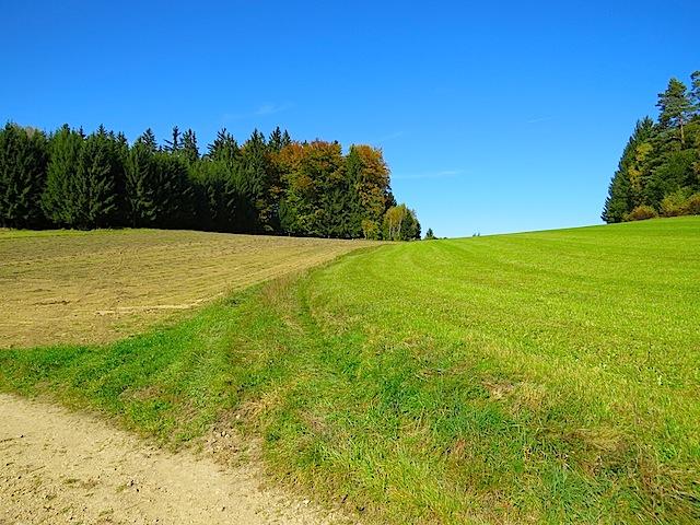 Feldweg Abzweigung