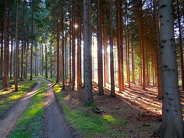 Hoheneicher Wald