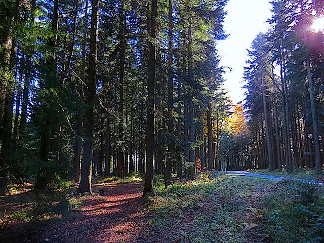Im Gemeindewald