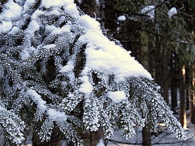Schnee und Raureif