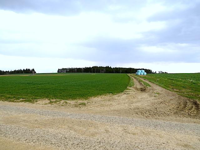 Abzweigung Feldweg