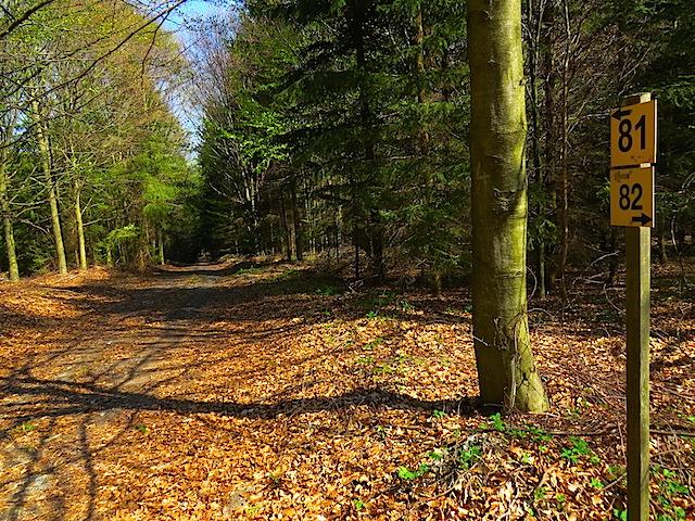 Abzweigung im Wald