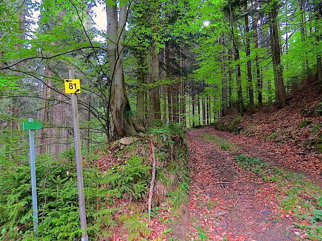 Grüner Holzpfeil