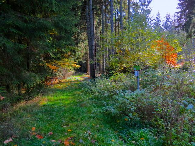 Waldbeginn