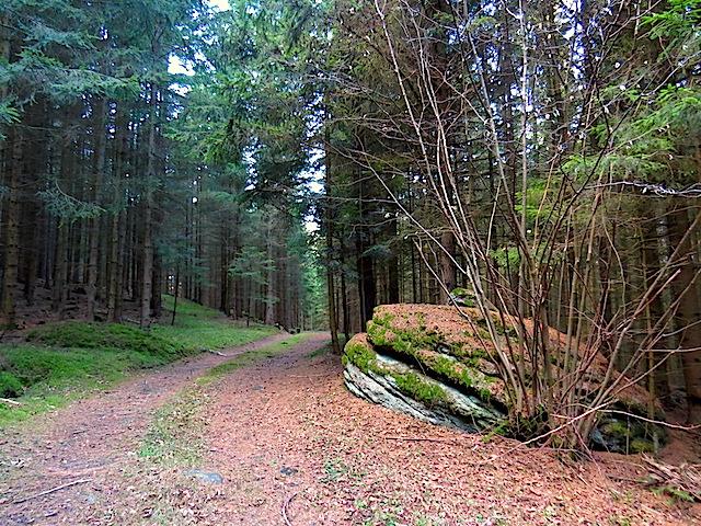 Waldweg bei Schroffen