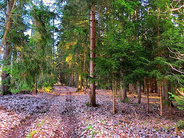 Im Laubwald