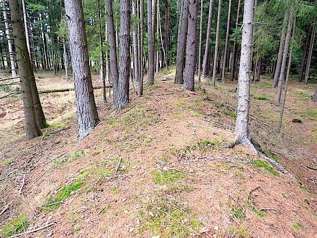 Damm im Wald