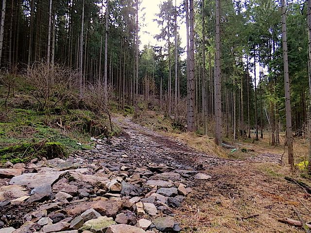 Forstweg Aufstieg