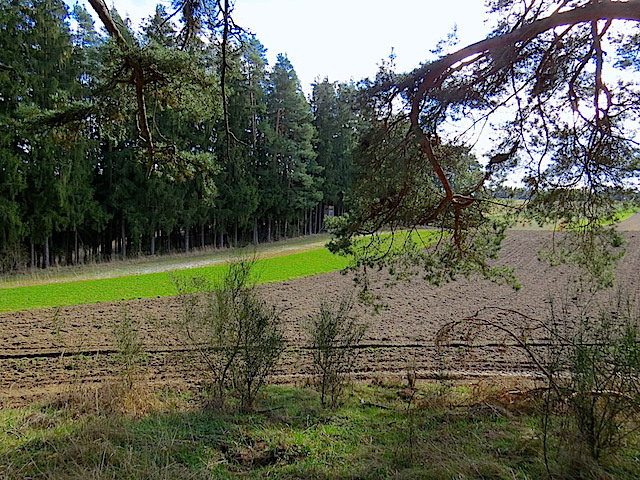 Felder des Mühlfeldes
