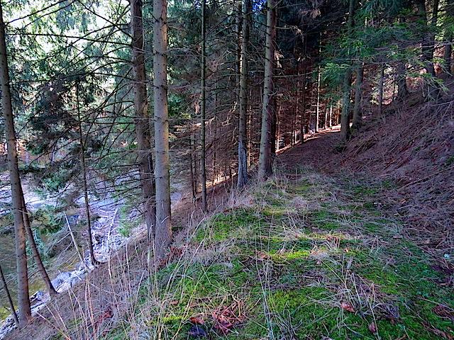 Forstweg - Waldweg