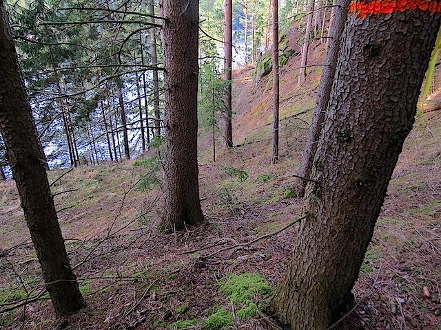 Abstieg zum Forstweg