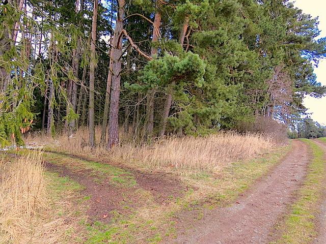 Links in den Waldweg