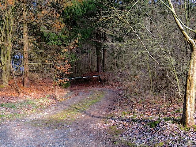 Waldweg Richtung Lichtenfels