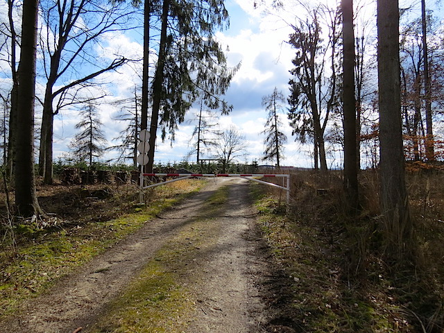 Im Klosterwald