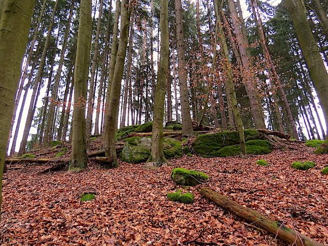 Aufstieg Laubwald