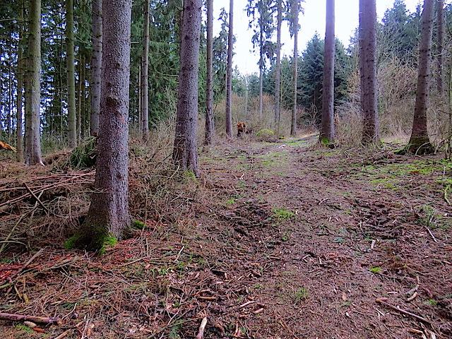 Anschluß Waldweg