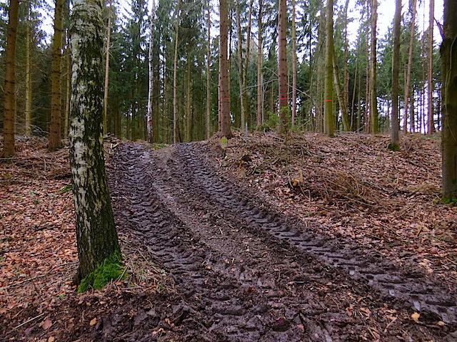 Feuchter Waldweg