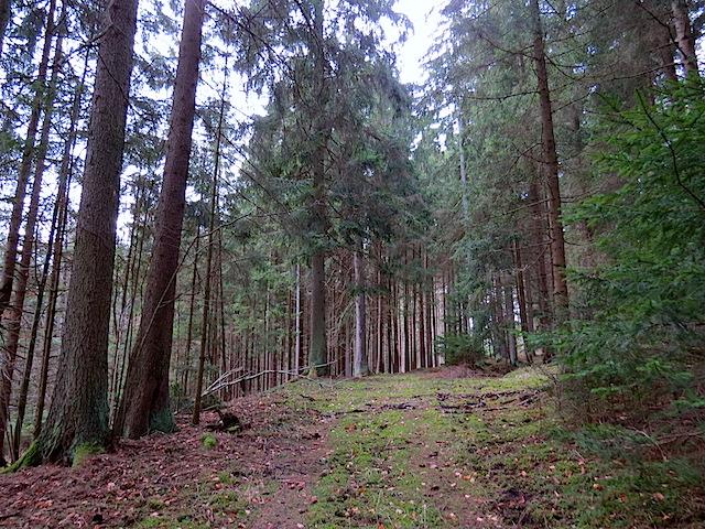 Waldweg Talende