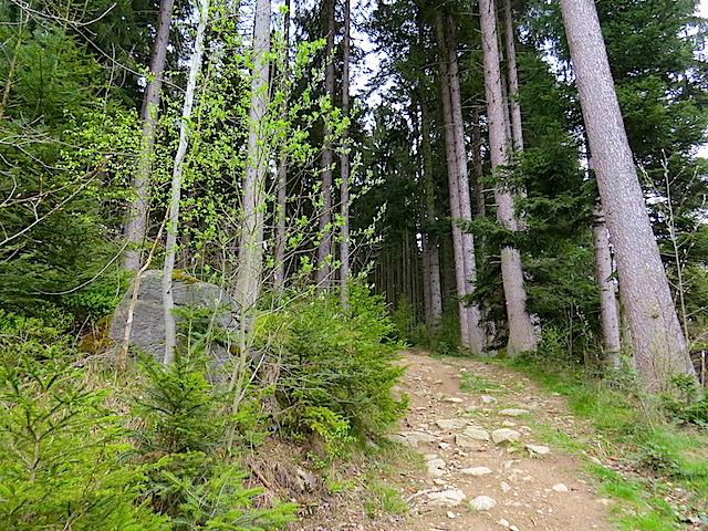 Aufstieg Schwarzalm