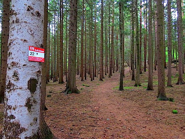 Durch den Hochwald
