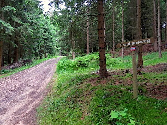 1.Abzweigung im Wald