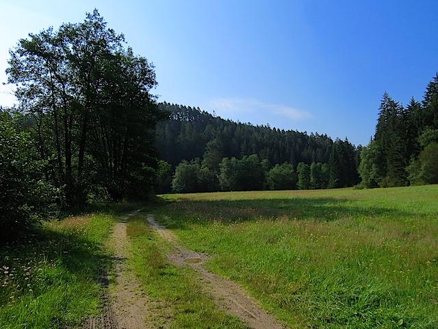 Richtung Waldrand