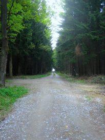 Die Fürnbergsche Poststraße