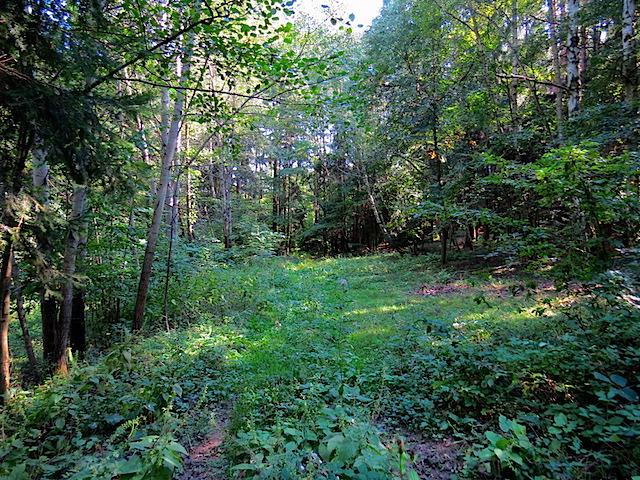 Verwachsener Waldweg