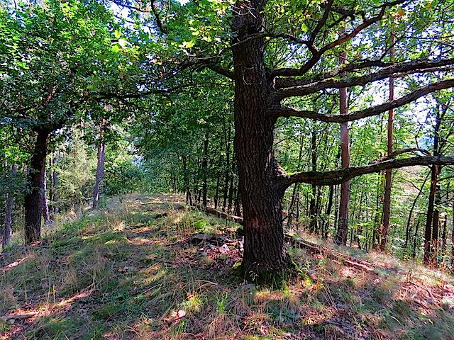 Auf dem Waldrücken