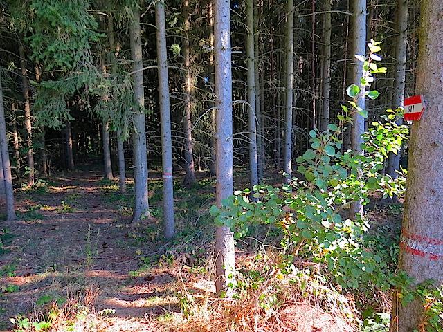 Abzweigung Wald